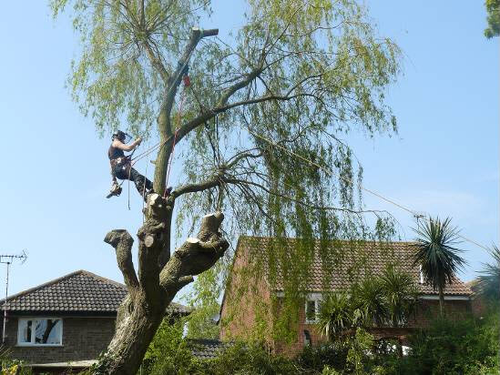 tree-felling2