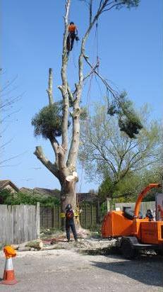 tree-felling1